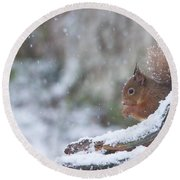 Red Squirrel On Snowy Stump Round Beach Towel