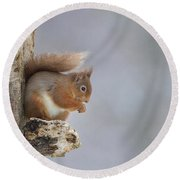 Red Squirrel On Tree Fungus Round Beach Towel