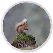 Red Squirrel Peeling A Hazelnut Round Beach Towel