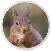 Red Squirrel - Scottish Highlands #18 Round Beach Towel