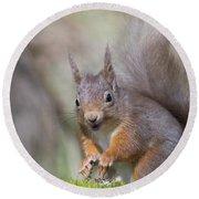 Red Squirrel - Scottish Highlands #26 Round Beach Towel
