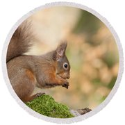 A Moment Of Meditation - Red Squirrel #27 Round Beach Towel