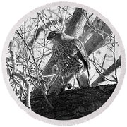 Red Tail Hawk In Black And White Round Beach Towel