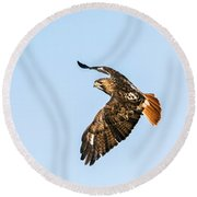 Red-tail Hawk In Flight Round Beach Towel