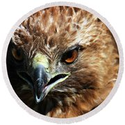 Round Beach Towel featuring the photograph Red-tail Hawk Portrait by Anthony Jones