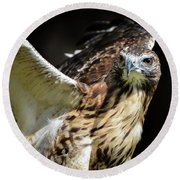 Red Tail  Hybrid Round Beach Towel by Amy Porter