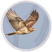 Red Tailed Hawk 20100101-1 Round Beach Towel