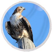 Red Tailed Hawk And Moon Round Beach Towel