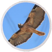 Red Tailed Hawk In Flight Round Beach Towel