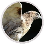 Round Beach Towel featuring the photograph Red-tailed Hawk In Profile by William Selander