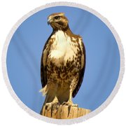Red-tailed Hawk On Post Round Beach Towel