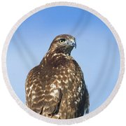 Red-tailed Hawk Perched Looking Back Over Shoulder Round Beach Towel