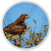 Red-tailed Hawk  Round Beach Towel