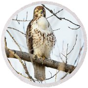 Red-tailed Hawk With Full Crop Round Beach Towel