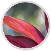 Red Ti Leaves 02 Round Beach Towel