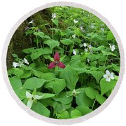Red Trillium At Center Round Beach Towel