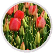 Red Tulips Round Beach Towel by Mihaela Pater