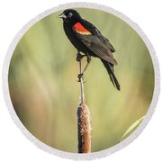 Round Beach Towel featuring the photograph Red-wing On Cattail by Robert Frederick