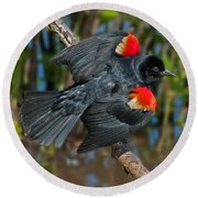 Red-winged Blackbird Round Beach Towel by Suzanne Stout