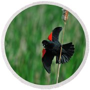 Red-winged Blackbird Round Beach Towel by Tony Beck