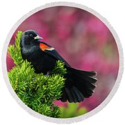 Red Winged Blackbird With Crabapple Blossoms Round Beach Towel