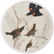 Red Winged Starling Or Marsh Blackbird Round Beach Towel