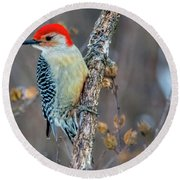 Redbellied Woodpecker Round Beach Towel by Skip Tribby