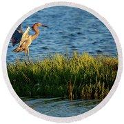 Reddish Egret Landing Round Beach Towel