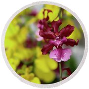 Maroon And Yellow Orchid Round Beach Towel