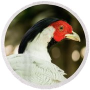 Redheaded Bird Portrait. Round Beach Towel