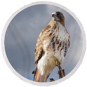 Redtail Portrait Round Beach Towel