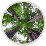 Redwood Tree Round Beach Towel by Henri Irizarri