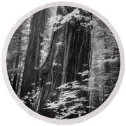Redwood Trunk Round Beach Towel by Craig J Satterlee