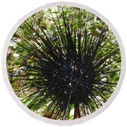 Reef Life - Sea Urchin 1 Round Beach Towel
