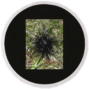 Reef Life - Sea Urchin 2 Round Beach Towel