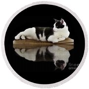 Reflection Of Black And White Cat Round Beach Towel