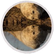 Reflection Of Seal Pup  Round Beach Towel