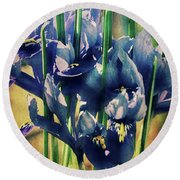 Round Beach Towel featuring the photograph Regal Splendour  by Connie Handscomb