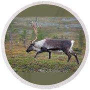 Reindeer Round Beach Towel by Aivar Mikko