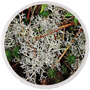 Reindeer Moss Round Beach Towel by Joy Nichols