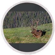 Relaxed Elk Round Beach Towel