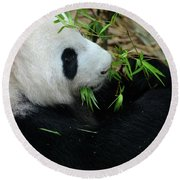 Relaxed Panda Bear Eats With Green Leaves In Mouth Round Beach Towel