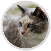 Round Beach Towel featuring the photograph Relaxed by Teresa Zieba