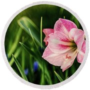 Remembering Amaryllis Round Beach Towel