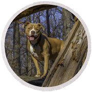 Remy In Tree Oil Paint More Pop Round Beach Towel