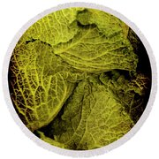 Renaissance Chinese Cabbage Round Beach Towel