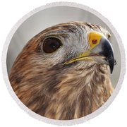Rescued Hawk Round Beach Towel