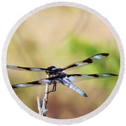 Rest Area, Dragonfly On A Branch Round Beach Towel