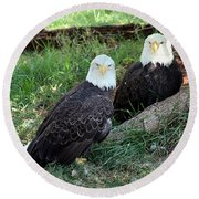 Resting Bald Eagles Round Beach Towel by Sheila Brown