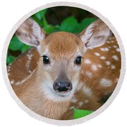 Resting Fawn Round Beach Towel